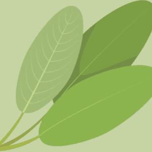 Oliva! EVOO Sage Olive Oil
